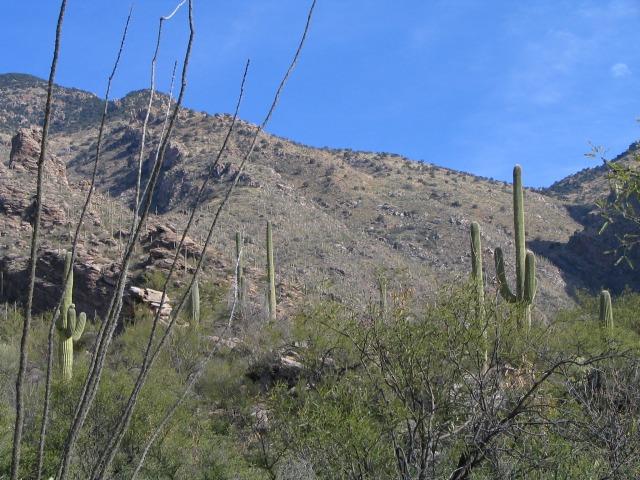 Santa Catalina1
