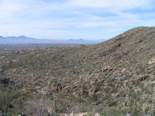 Tucson2
