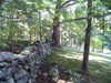 old stone wall in forest